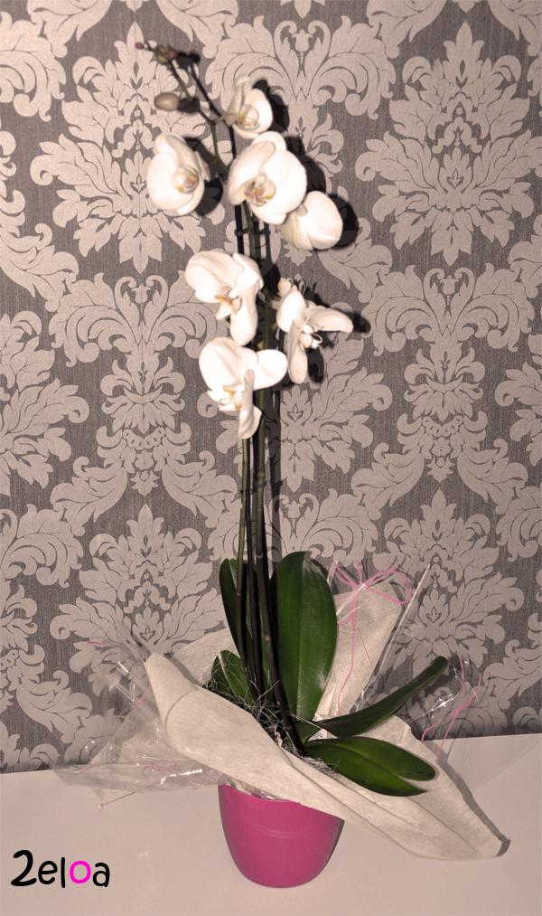 Orquídea - www.2eloa.com