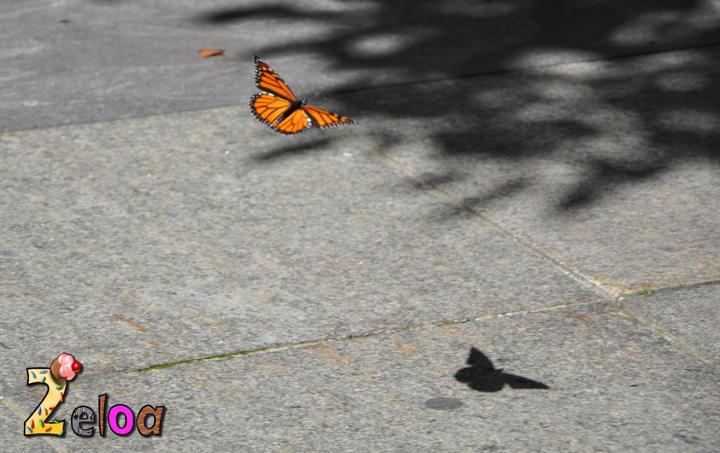 Miércoles Mudo: Butterfly Sahdow - www.2eloa.com