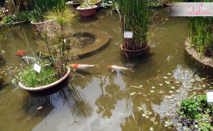 jardin-botanico-2eloa