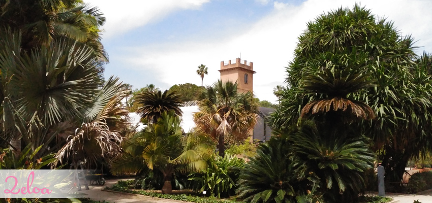Jard n bot nico de valencia disfr talo con ni os 2eloa for Jardin botanico cursos